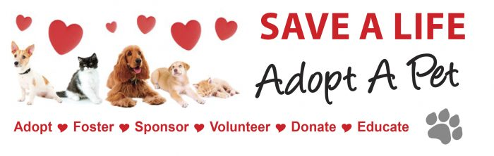 Animal Rescues Shelters