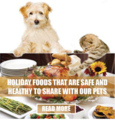 holiday-foods-1