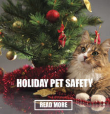 holiday-pet-safety