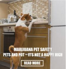 marijuana-pet-safety