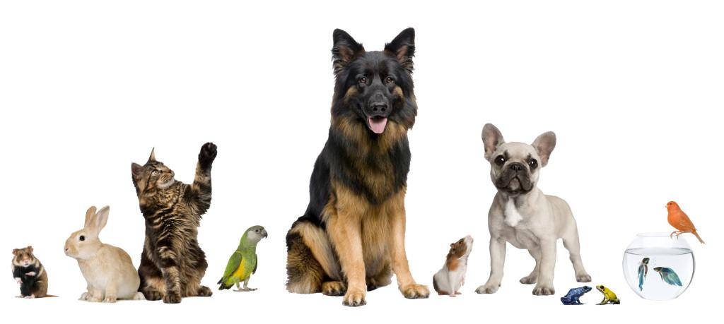Pets - Group