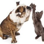 Dog Cat High-Five