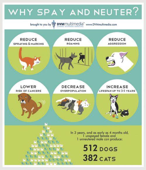 Spay-Neuter Infograph
