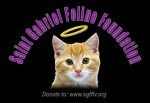 St. Gabriel Feline Foundation of Las Vegas