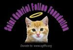 St. Gabriel Feline Foundation of Las Vegas