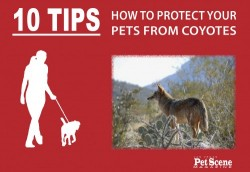 Coyotes - Protect Pets