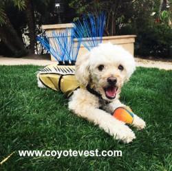 www.coyotevest.com copy