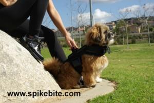 www.spikebite.com copy