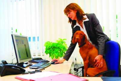 Dog at Office