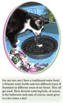 Feline H2O