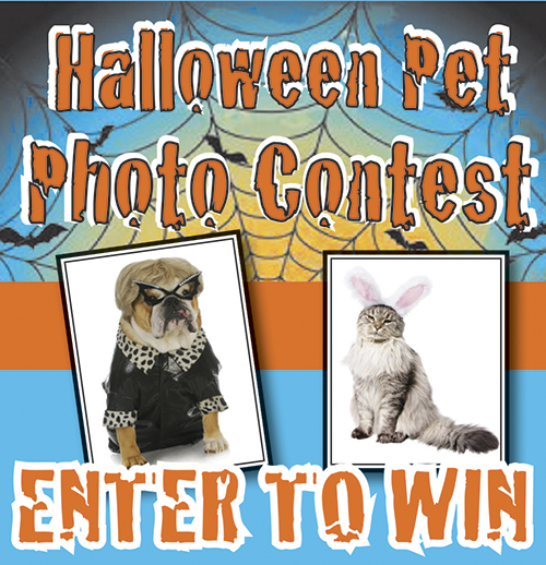 between september 1st and october 31st send us a photo of your halloween pet photo and t you will be entered to win a 50 gift certificate to lazy dog - Pet Halloween Photo Contest