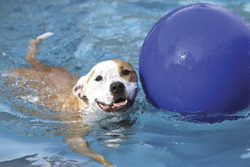 Swimming with ball