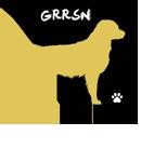 Golden Retriever Rescue Southern Nevada