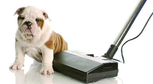 dog-on-vacuum