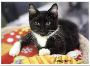 havlv-kitty