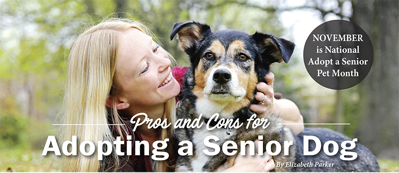Adopting An Older Dog Pros And Cons