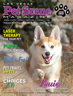 View January/February Edition